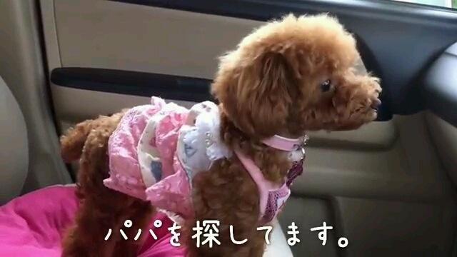 パパ〜字幕