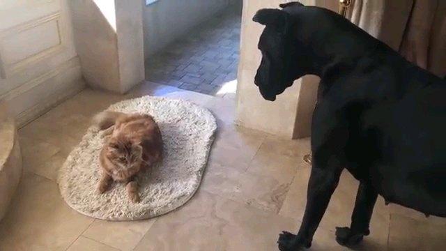 大きな黒い犬