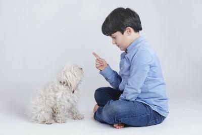 子犬をしつけている少年