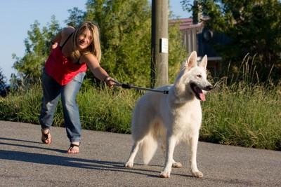 犬に引っ張られる女性