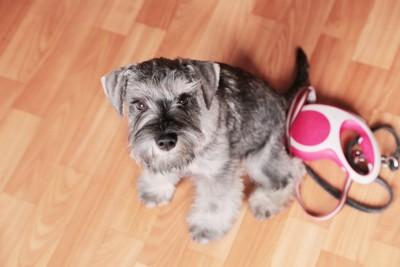 伸縮リードと犬