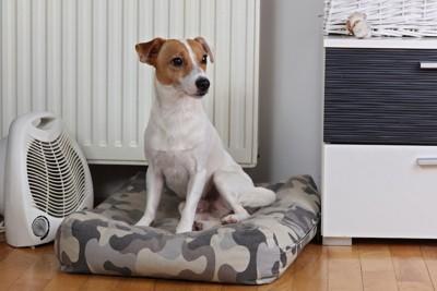 ヒーターの前のクッションに座る犬