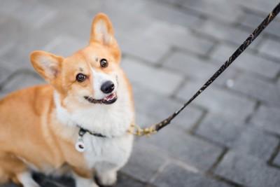 散歩中にこちらを見上げる犬