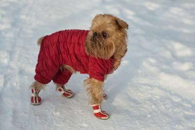 雪道で靴を履いた犬