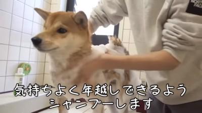 お風呂に入るワンちゃん