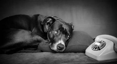 電話の側で寂しそうな表情の犬