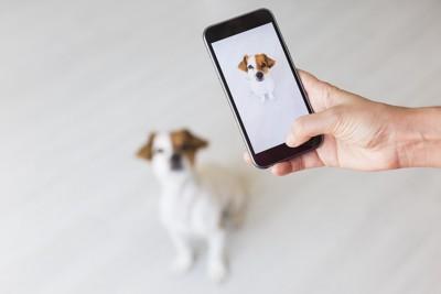 スマートファンで犬の写真を撮る人