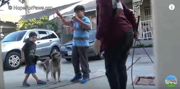 少年のそばでリラックスする犬