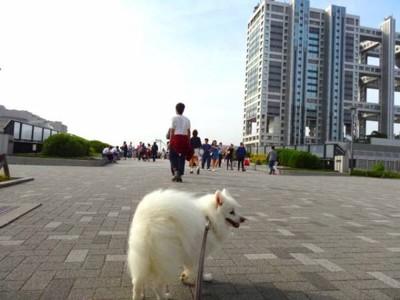 フジテレビ本社と犬