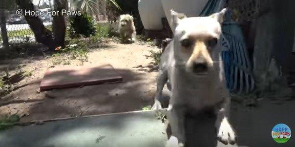 逃げ回る犬
