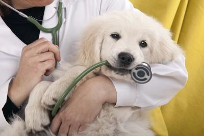 医者と犬の写真