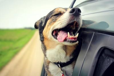 楽しそうにドライブする犬