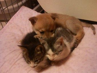子犬1匹と子猫2匹お団子になってる写真
