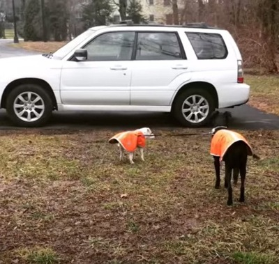 車に到着した犬