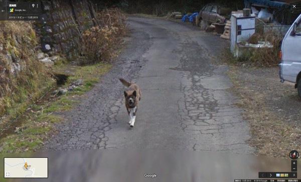 疾走するストリートビューに写り込んだ犬