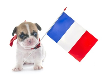 フランス国旗と子犬
