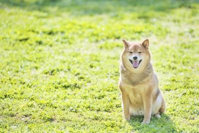 おすわりをしてこちらを見ている犬