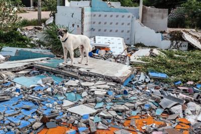 瓦礫の山の上にいる犬