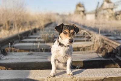線路に座る犬