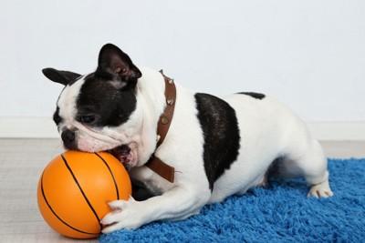 ボールをかじっている犬