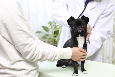 獣医さんに診てもらう犬