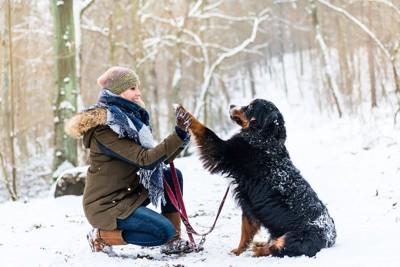 雪の上に座ってハイタッチする飼い主さんと犬