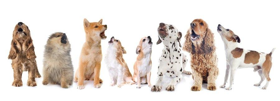 吠える様々な種類の犬たち