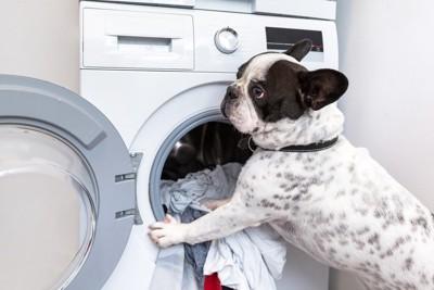 洗濯機の前にいる犬