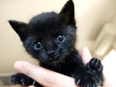 子猫 黒 手に抱かれている