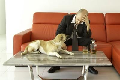 悩んでいる人と寄り添う犬