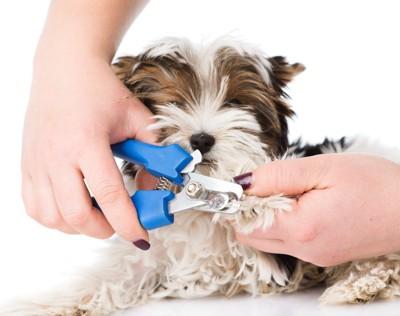 爪切りをされている犬