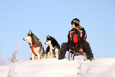 二頭の犬とソリに跨る女性