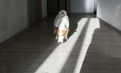 床のニオイをかぐ犬