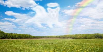 犬の形の雲と虹