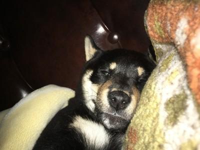 愛犬の寝顔写真9枚目