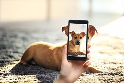 スマホで撮影される子犬