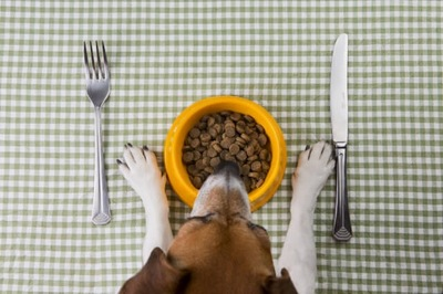 犬のダイエット食