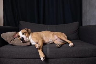 ソファでクッションを枕にして眠る犬