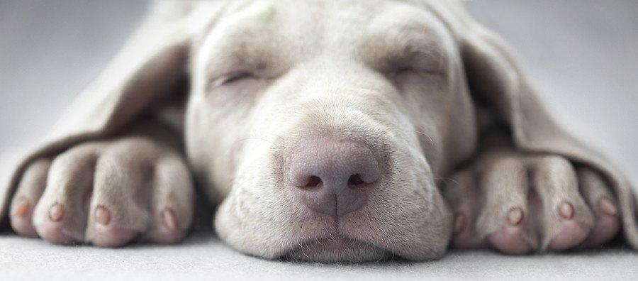 寝る犬の顔のアップ
