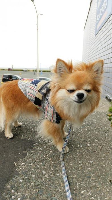 愛犬の変顔写真22枚目