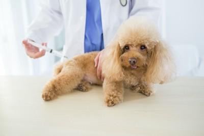病院で注射を打たれる犬
