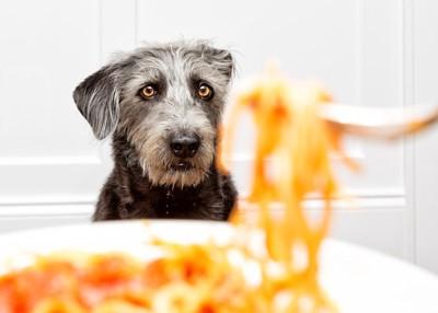 パスタを見つめる犬