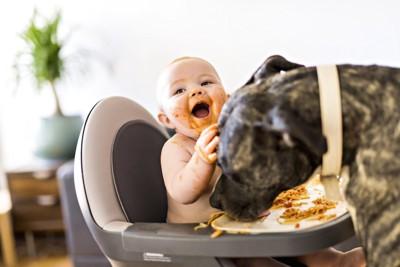 子供のご飯をつまみ食いする犬
