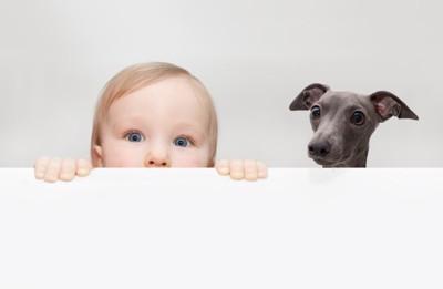 顔をのぞかせる赤ちゃんと犬