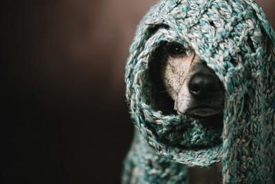 防寒装備の犬