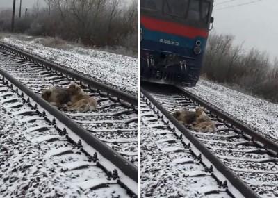 線路上の犬と電車が通過しようとしている様子