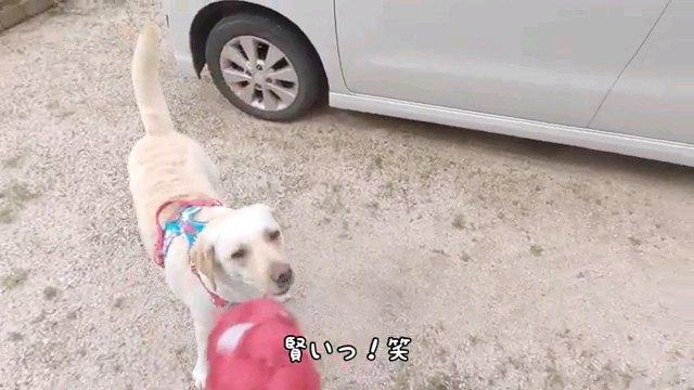 賢い!っ笑~字幕
