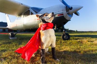 プロペラ機とマントを付けた秋田犬