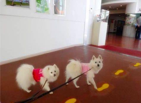 建物内を歩く犬