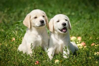 芝生で一緒に座る子犬